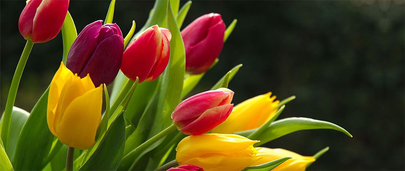 banners-de-hortalizas-flores