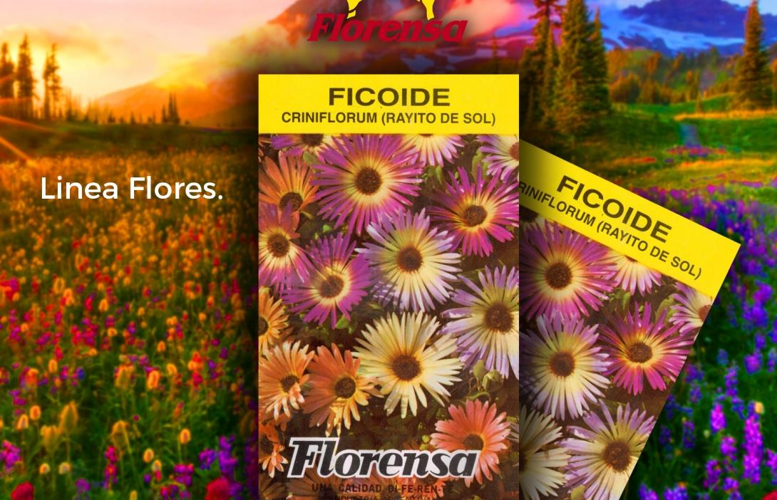 Ficoide