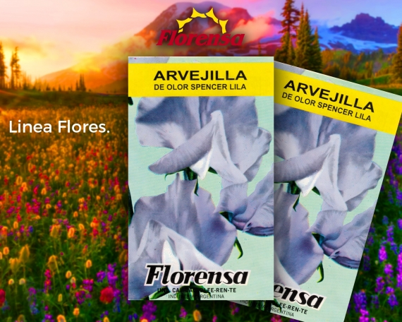 Arvejilla de olor spencer lila
