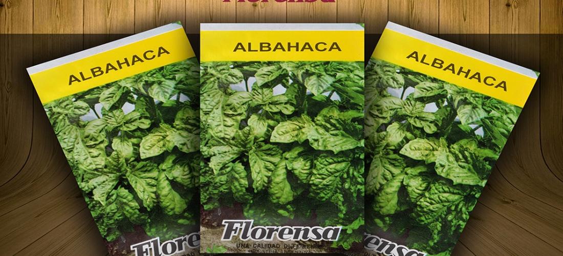 (Español) Albahaca Aromáticas