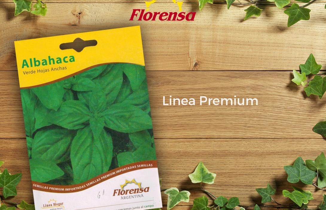 (Español) Albahaca Premium